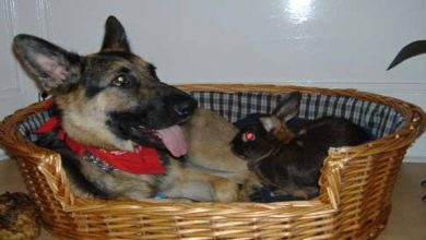 Photo of Marine Lets Himself Slow Down And Lose The 5K Marathon To Help Young Boy Finish