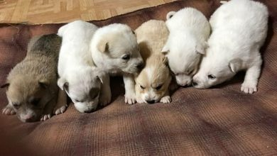 Photo of Woman and Her Horse Spread Positivity with Latest Internet Dance Challenge